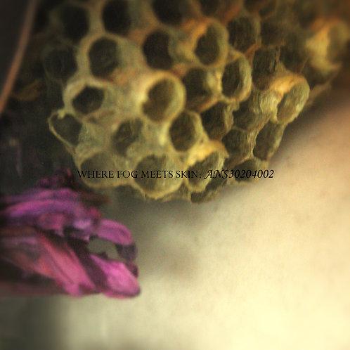 Where Fog Meets Skin - ANS30204002 (Digital Album)