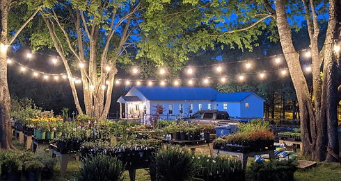 Charming Photo of the Plant nursery at night time.