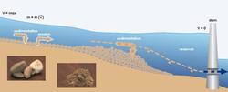 Dams generate sedimentation