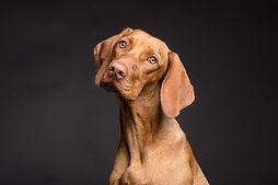 dog-3277416_1920.jpg