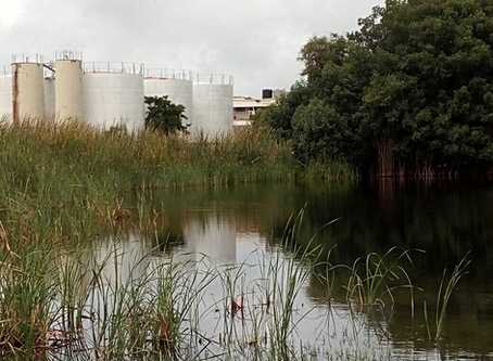Is Golden Lead Polluting The Lagoon Again?