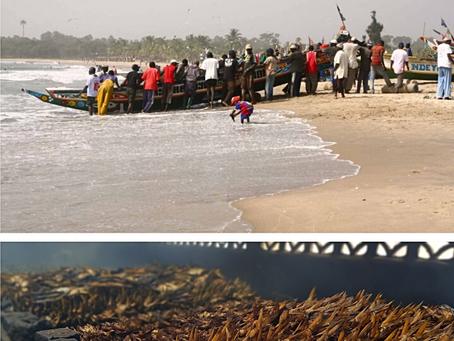 GunjurBiz:We Must Revive our Fishing Industry