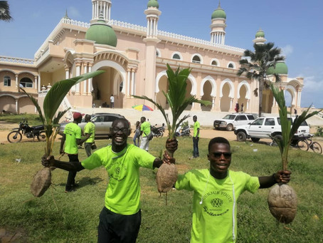 Operation Green Up Gunjur concludes with planting of 21 coconut trees
