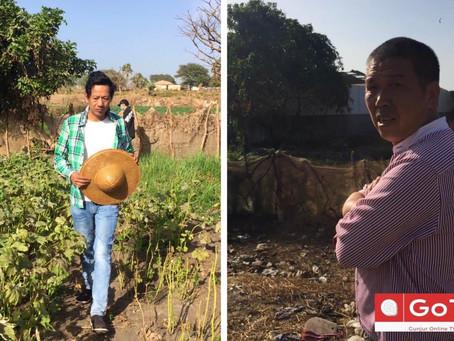 Injunction granted barring Golden Lead from women vegetable garden at Gunjur beach