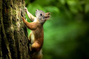 Eichhörnchen immer dabei!