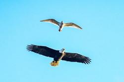 eagles by Blake.jpg