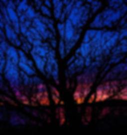 Tree of dreams.jpg