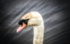 swan neck.jpg