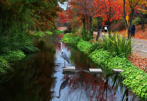 Autumn Landscape of Sangdong Citizen Riv
