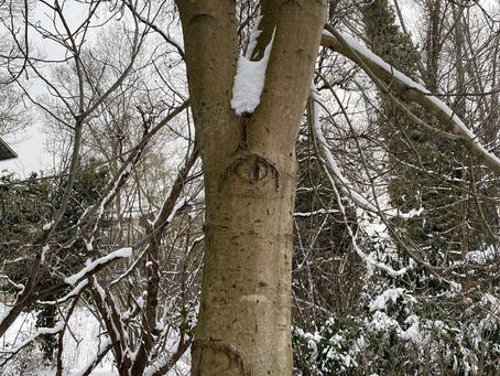 Sevgili ağaç