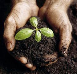 compost, source de fertilité...