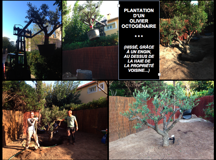 Etape 4 : Savez-vous planter... ?