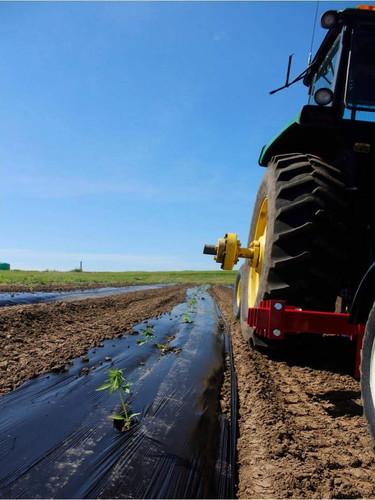 seedlings plastic tractor.jpg