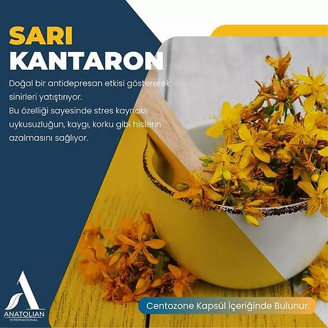 Anatolian International Hammadelerinin içerinde Ozon ve Sarı Kantaron bulunur