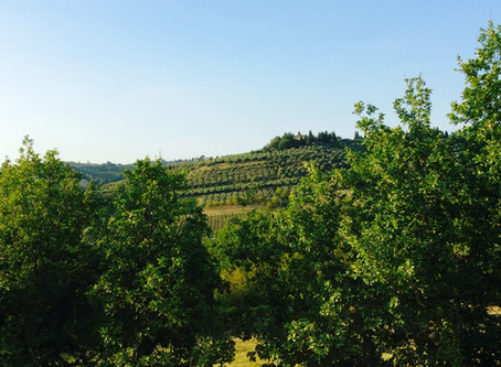 LUSH GRAPE AND OLIVE GROVES