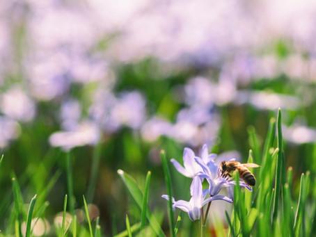 Megjött a tavasz, lassan előbújnak a levelek