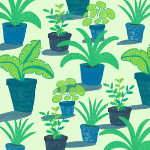 Lockdown House Plants