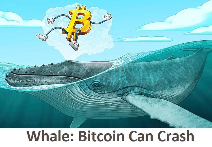 Whale: Bitcoin Can Crash