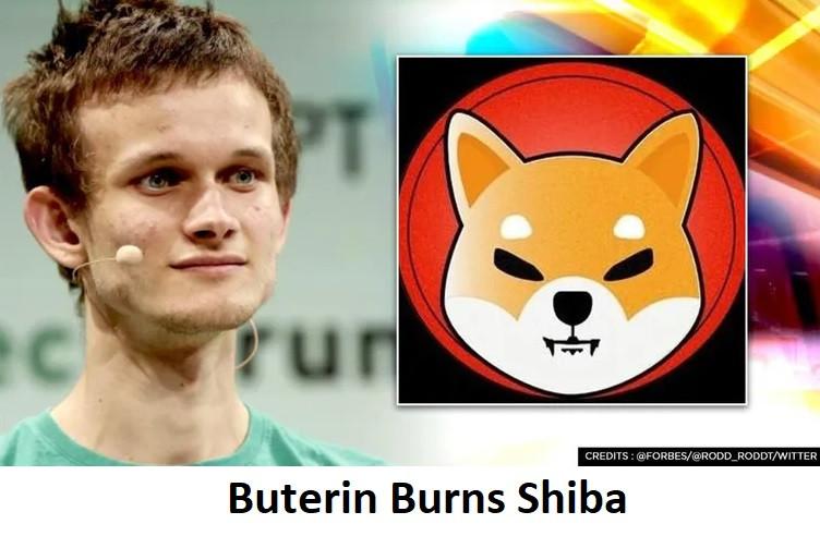 Buterin Burns Shiba
