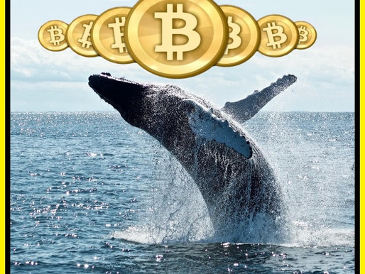 Crypto Whales are Rising