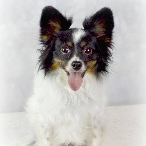 Sarasota Dog Groomer