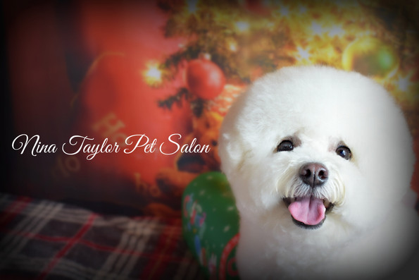 Nina Taylor Pet Salon