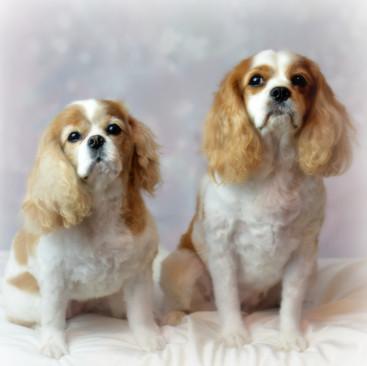 Sarasota Pet Grooming