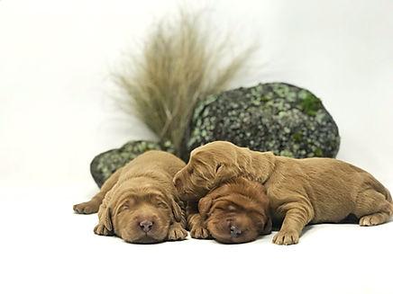 Eeyore, Roo & Kanga 1 week old