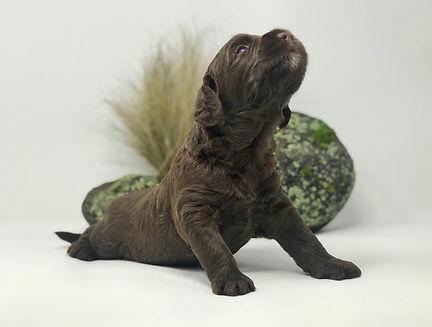Muddy Waters 3 weeks old.jpeg