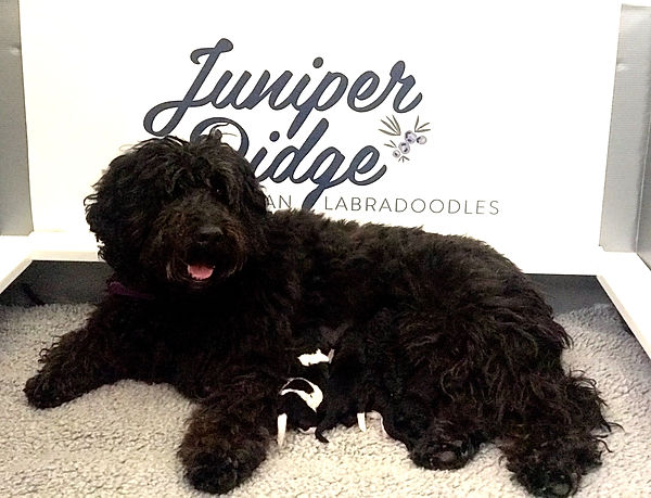 Juniper's 4 Wheelers