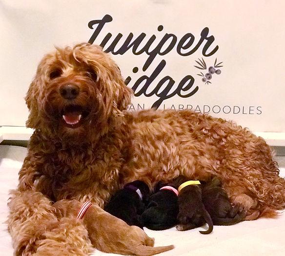 Honey's Bright Future Puppies