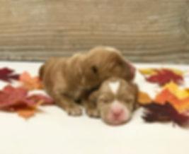 Ernie & Minnie Adelaide 1 week old..jpg