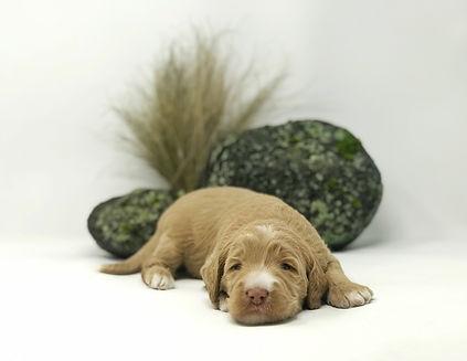 Ella Fitzgerald  3 weeks old.jpeg