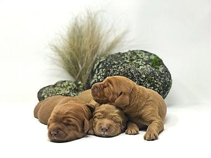 Pooh-bear, Tigger & Piglet 1 week