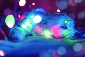 blue-green-and-pink-light-bokeh-675903.j