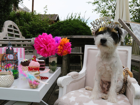 Lilo and her first birthday