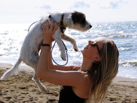 Lilo the travel dog