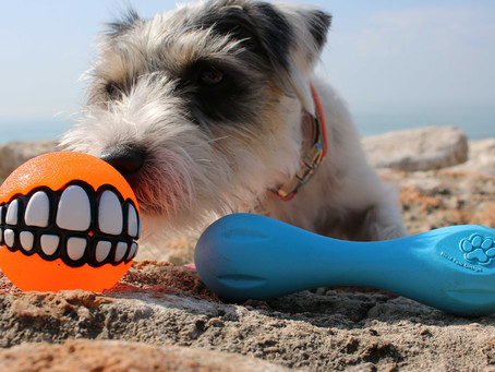 Lilo and a good Dog Toy