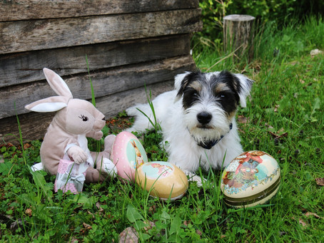 Lilo and the Easter rabbit