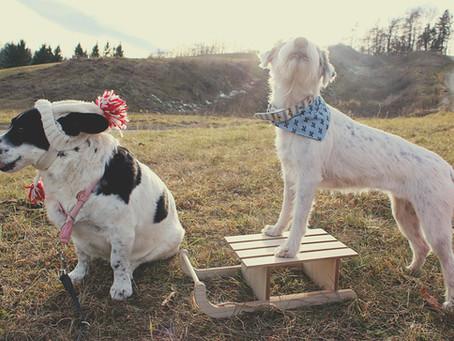 Lilo and Lotti