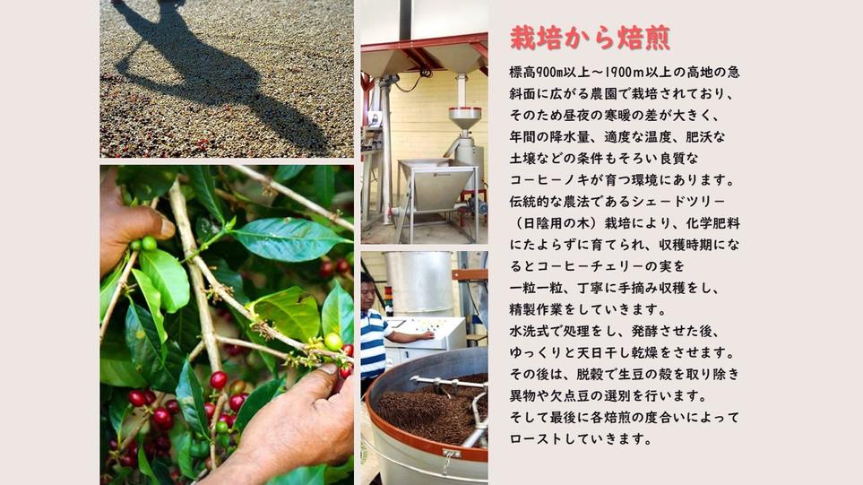 Presentación1 栽培から焙煎.jpg