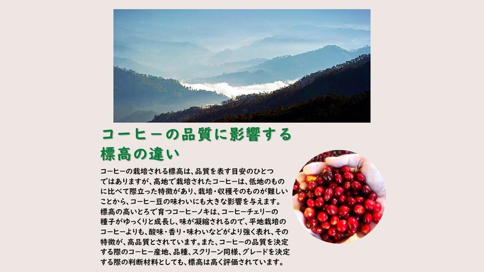 Presentación2 コ-ヒ-の標高の説明.jpg