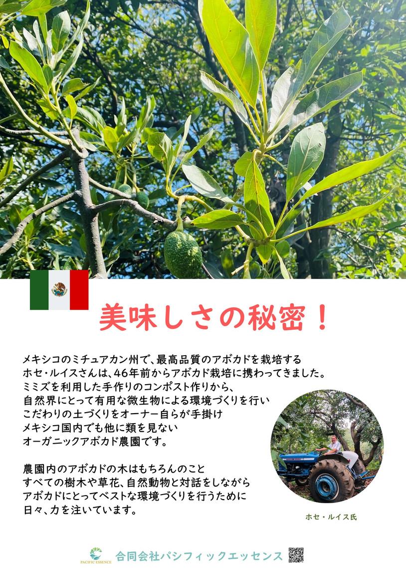A2_tate アボカドのポスタ-(農園紹介).jpg