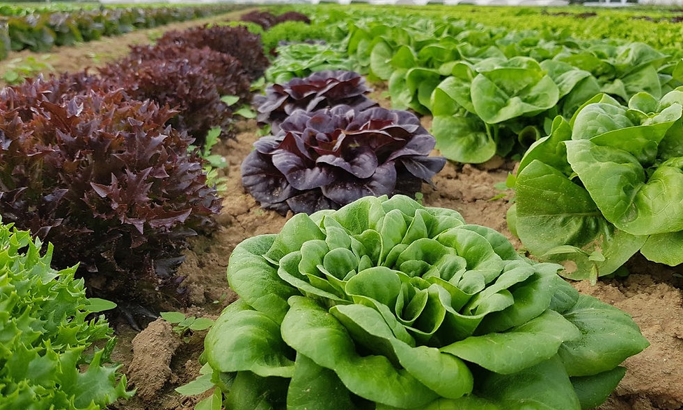 petite salade X 3