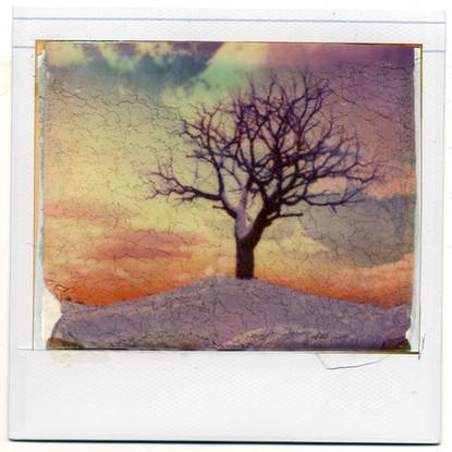 Polaroid - Lift On