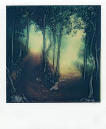Il Bosco - Polaroid Artistic TZ Manipolata
