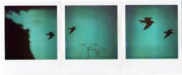 Trittico - Volo sul Fortino - Agropoli - Polaroid Artistic TZ Manipolate