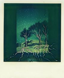 Radici - Polaroid Artistic TZ Manipolata