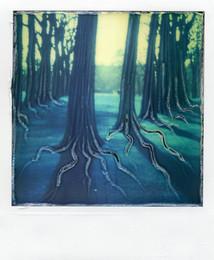 Sottobosco - Polaroid Artistic TZ manipolata