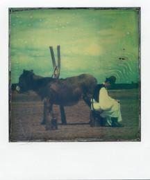 Pastore in pausa - Polaroid Artistic TZ Manipolata